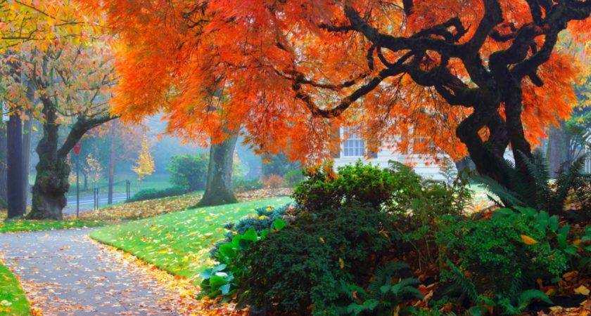 Amazing Color Fall Landscape Landscaping Ideas