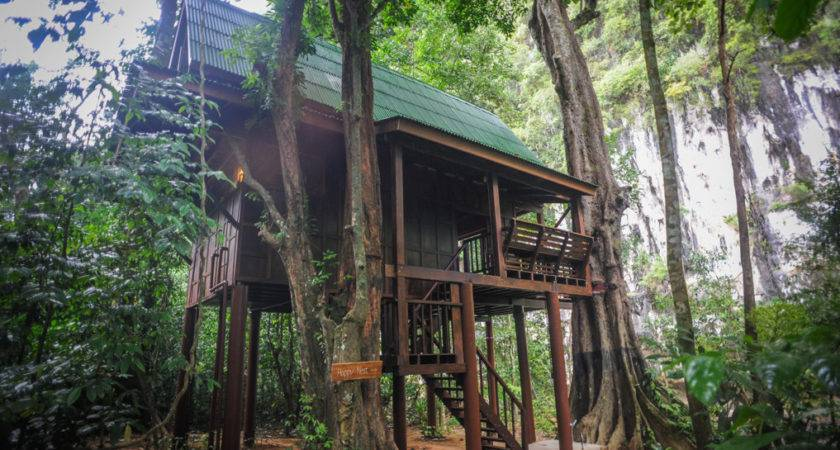 Amazing Tree House Jungle Best Design