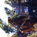 Awesome Best Hut Treehouse New Zealand Has Remote