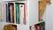 Catcase Bookcase Ideal Playground Your