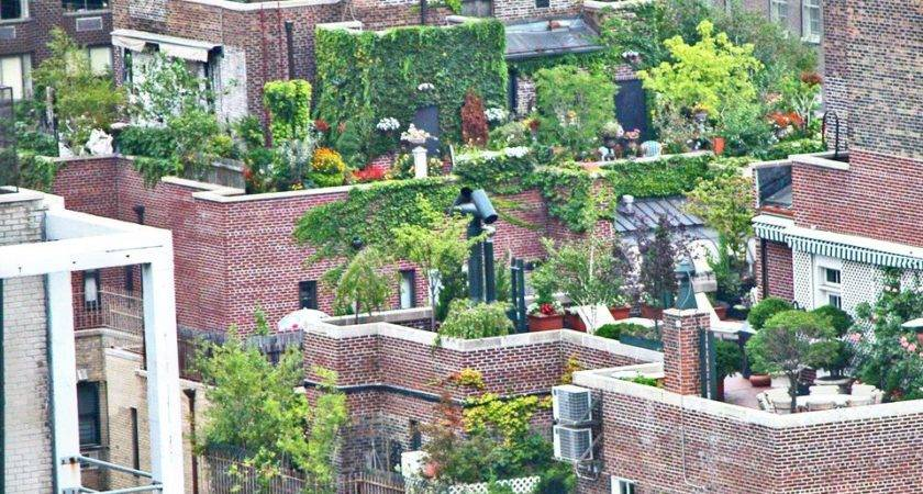 Consider Before Planting Rooftop Garden
