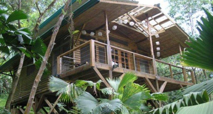 Cool High Quality Pix Photos Incredible Tree House