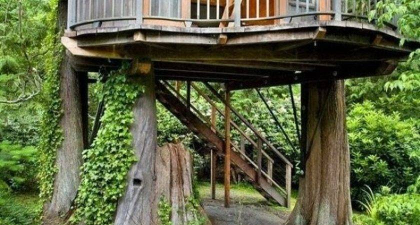 Dream Treehouses Could Happily Live Avoid