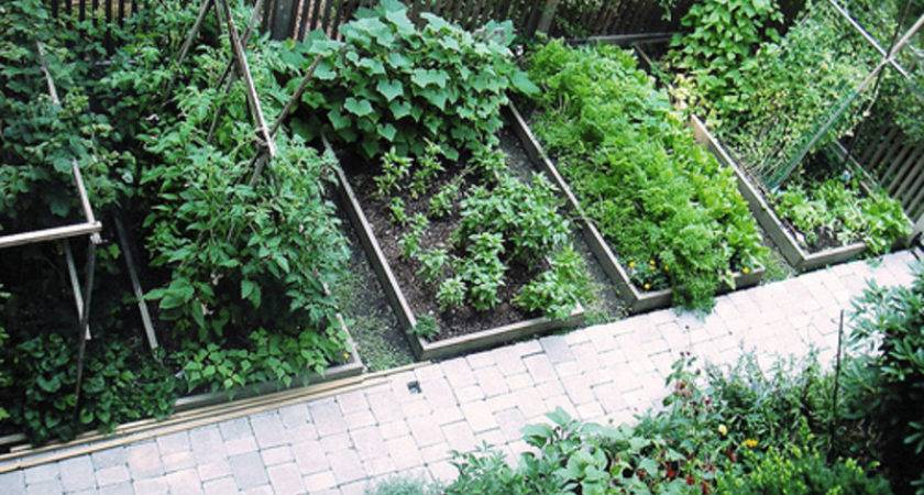 Grow Your Own Food Increased Security Health