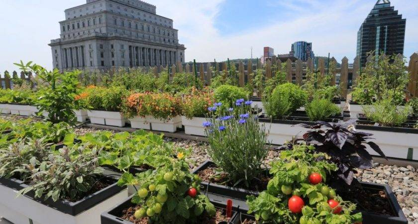 Hgtv Presents Gardens Sky Other Rooftop Green