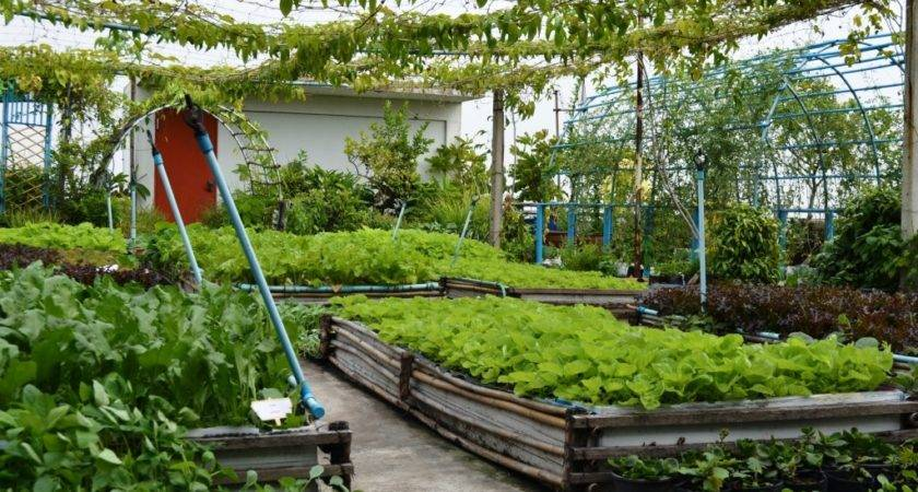 Regenerative Organic Agriculture Roof Top Gardens