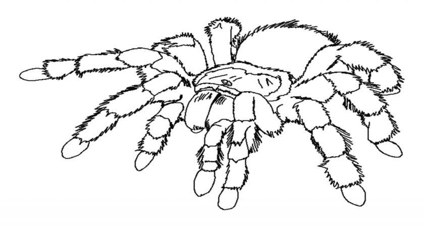 Spider Coloring