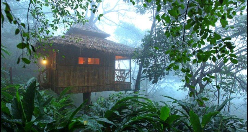 Tree House Jungle Best Design Amazing